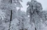 銀裝素裹分外妖嬈雪景美圖
