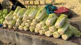 實拍濟南唐王大集的各種新鮮蔬菜,菜農直銷價格實惠