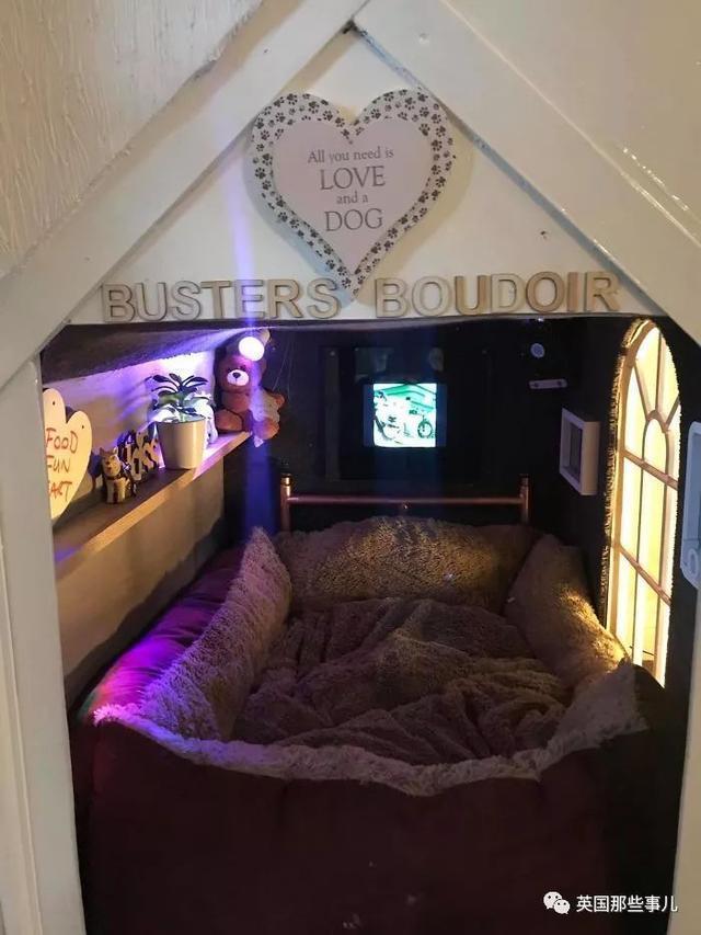 為撫慰狗子,鏟屎官給它建了個小屋,這簡直比我住的還溫馨...