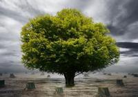 塔羅占卜:下起暴雨,站在哪棵大樹下不被雷劈?測你近期運勢如何