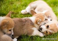 狗狗最常見的7種動作,很多鏟屎官都誤會了,快看看你中招沒有?