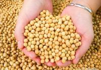 脂肪肝——兩種食物是脂肪肝剋星