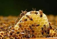蜜蜂也有自閉症?!