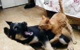 貓和狗是天敵嗎?那可不一定,看看這些貓咪和狗狗的搞笑瞬間