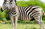 15張有趣的動物照片,證明大自然有幽默感!