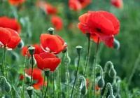 這100多種觀花植物,花期都是秋天,你種了嗎?