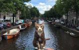小夥帶自家的貓咪出國旅遊,不需要辦手續就能上飛機