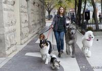 《一條狗的使命2》影評:生命一正一反魅力,可以那麼的令人陶醉