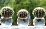 用水就能養活,新手也能養出漂亮的花兒,看看喜歡哪一種