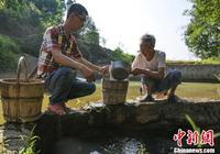 瀘州七旬老翁苦守山樑15年 只為群眾煮茶消暑解渴