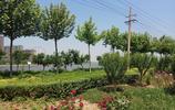 山西襄汾:汾河公園風景線