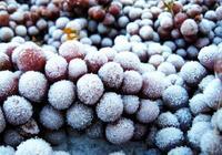 樹上冰凍的葡萄——葡萄界的異類!