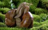 全球最好看的小蝸牛圖片,你看過哪些?頂尖攝影大師作品合集錦
