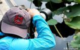 又是荷花綻放季,鄭州紫荊山公園成為攝影人打卡地