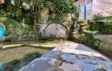 烏當黃連1200年古銀杏樹和黃連瀑布