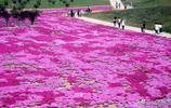 """洛陽最美的""""奧斯卡紅毯""""消失 已成大工地 賞花人注意了不用去了"""