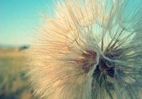 不懂時別亂說,懂得時別多說,心亂時慢慢說,沒話時就別說