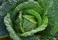 女性不想變老,不妨多吃3種蔬菜,滋養子宮,淡化皺紋,顯年輕