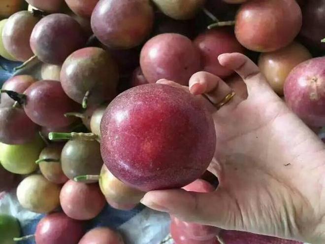 """農村種的""""百香果"""",全國只有一個地方種植,很多的人都沒吃過"""