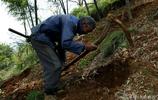 農村老人挖竹筍,找出竹筍很高興