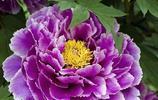 這些花都很美,但是誰最美?