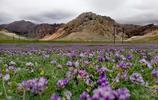 青海德令哈這座山因柏樹出名,但它們卻給了這座山最美的顏色!
