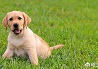 狗狗害怕自己的主人拋棄它嗎?為什麼?