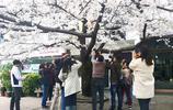 杭州一小花貓連續4年景點做模特,被市民遊客扎堆拍攝成網紅