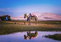 塔羅占卜:選出一匹有靈性的駿馬,測你這輩子還能不能出人頭地!