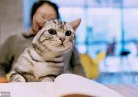 社會化訓練,讓貓咪變得粘人的關鍵過程