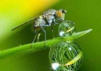 昆蟲是如何喝水的?