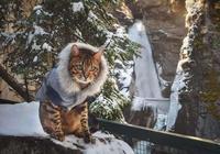 養貓以後,家裡記得留出這四個地方,貓咪會感謝你的!