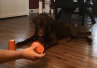 家裡的狗狗太笨了,鏟屎官巧用這一招解鎖狗狗智商實在百試不爽