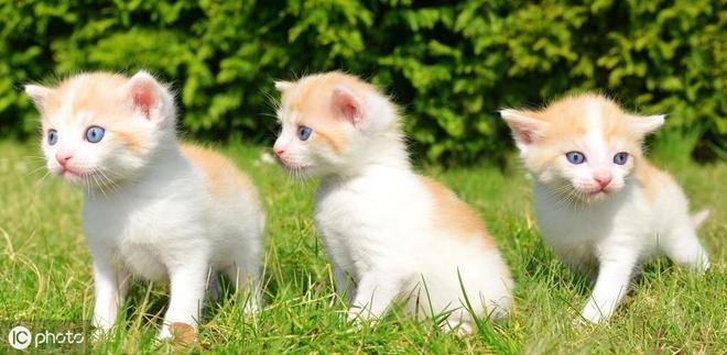 幼貓據說站在貓咪顏值巔峰
