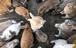 撲朔迷離的神祕兔子島,喜歡兔子的你不容錯過哦