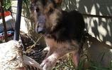 遺棄狗得了嚴重的皮膚病,一週後救助者把它帶回家了!