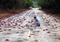 男子看到滿大街螃蟹想抓卻被阻止,知道真相大吃一驚
