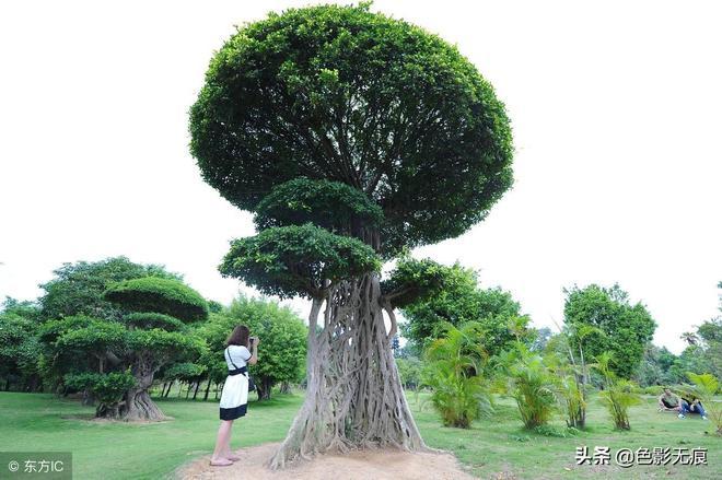"""南寧出現會""""織網""""的樹,外形奇葩,引發關注,你知道是什麼樹?"""