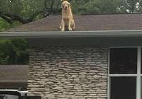 路人發現狗狗被困屋頂,急忙通知這戶人家,當得知真相後大笑不已