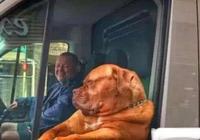 男子等紅燈發現旁邊車裡有隻狗在瞅自己,這個表情太逗了!
