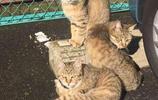 """""""聽說你要砸場子?我們三兄弟等著你""""14張有趣貓咪圖讓你笑不停"""