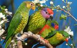 會說話的寵物——鸚鵡