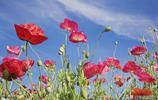 這樣拍:紅花綠葉藍天做背景,美呆了