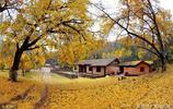 中國千年銀杏谷:有308棵千歲銀杏,17000棵百歲銀杏