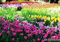北京懷柔雁西島花卉