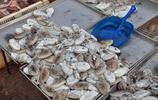 青島早市紅頭魚10元4斤 鯧魚25元 大媽成筐買回家 趁早備貨過冬