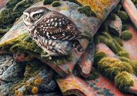藝術家ANDREW HUTCHINSON 2.部分鳥類