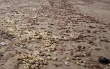男子海灘邊遊玩發現大量透明球狀物,抓起查看讓人感到驚奇