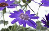 這是世界上評為最美的花,美的像畫,你認識嗎