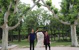 """奇!淮陽太昊陵景區的""""連理枝""""""""愛情樹"""",讓無數遊客歎為觀止"""